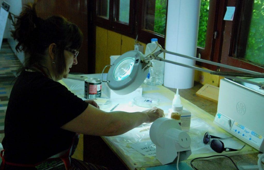glass conservation fieldschool