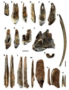 Bone tools and ornaments
